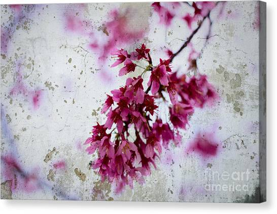 Deep Pink Flowers With Grey Concrete Texture Background Canvas Print