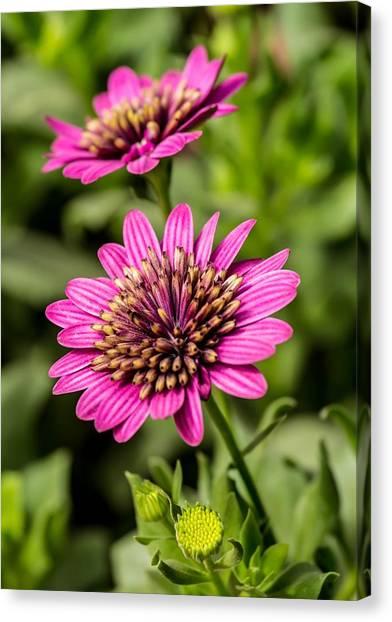 Desert Flower Canvas Print by Pete Mecozzi