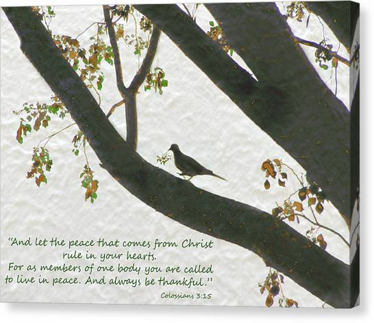 Dove Silhouette On Tree Canvas Print