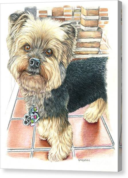 Yorkshire Terrier Canvas Print - Dutch by Catherine Garneau