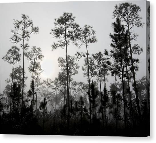 Early Morning Fog Landscape Canvas Print by Rudy Umans
