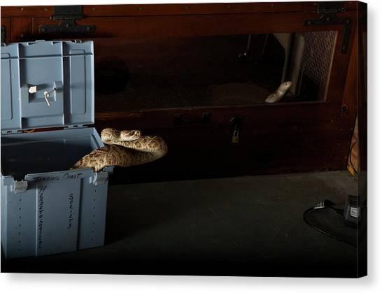 Burmese Pythons Canvas Print - Eastern Diamondback Crotalus Adamanteus by Aaron Ansarov
