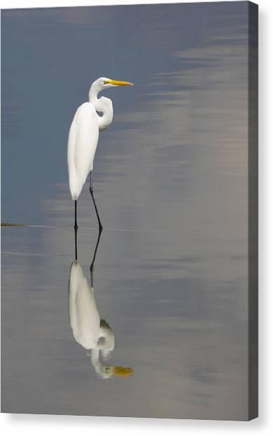 Egret Standing Canvas Print