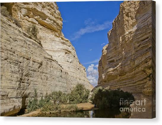 Negev Desert Canvas Print - Ein Avdat  Negev Desert Israel by Eyal Bartov