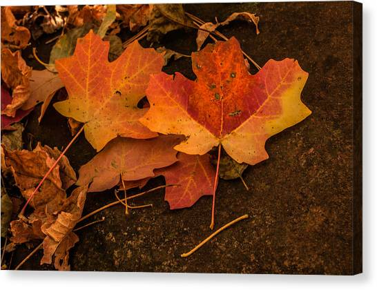 West Fork Fallen Leaves Canvas Print