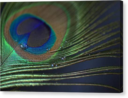 Feather Weight Canvas Print