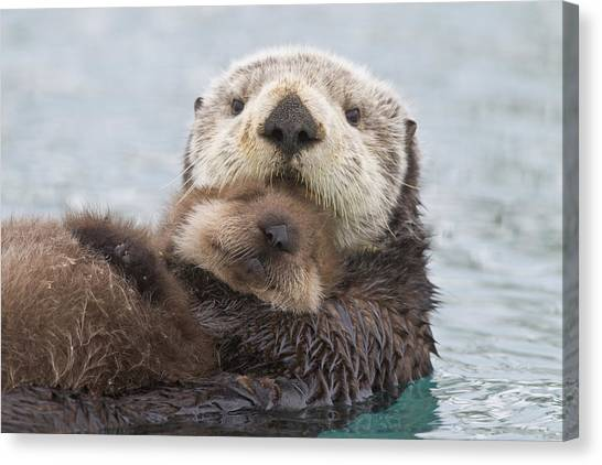 Otters Canvas Print - Female Sea Otter Holding Newborn Pup by Milo Burcham