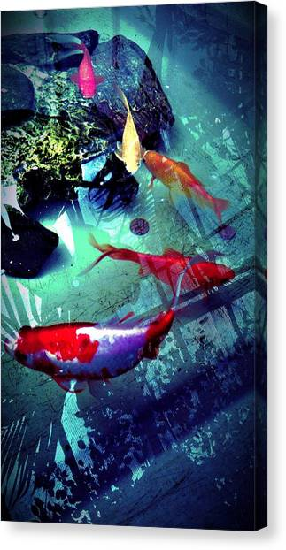 Koi Canvas Print - Fish by Chris Drake