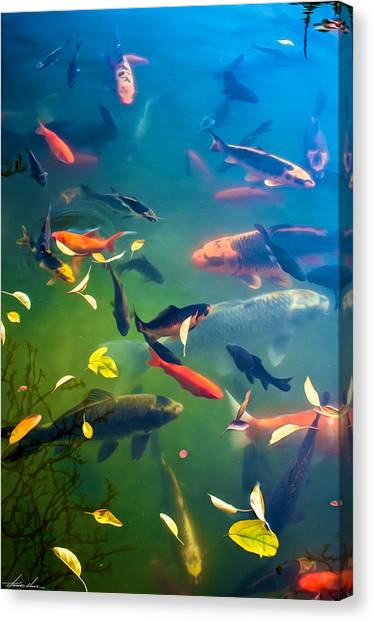 Fish Pond Canvas Print