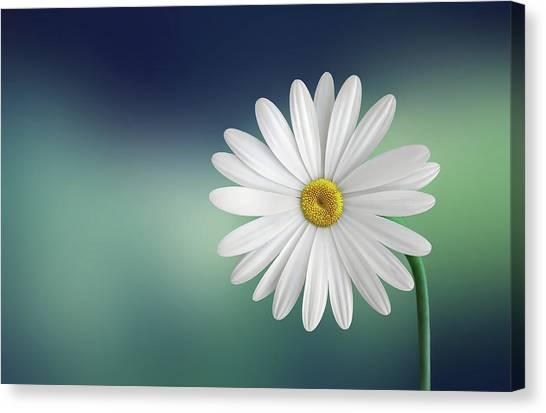 Macro Canvas Print - Flower by Bess Hamiti
