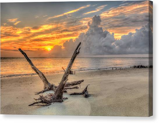 Folly Beach Driftwood Canvas Print