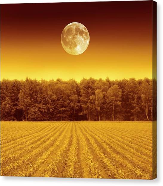 Full Moon Over A Field Canvas Print by Detlev Van Ravenswaay