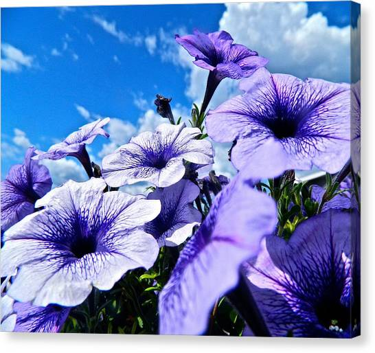 Glorious Morning Canvas Print