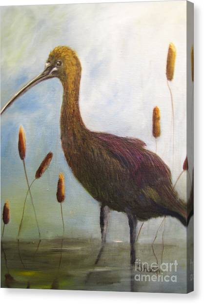 Glossy Ibis Canvas Print by Sharon Burger