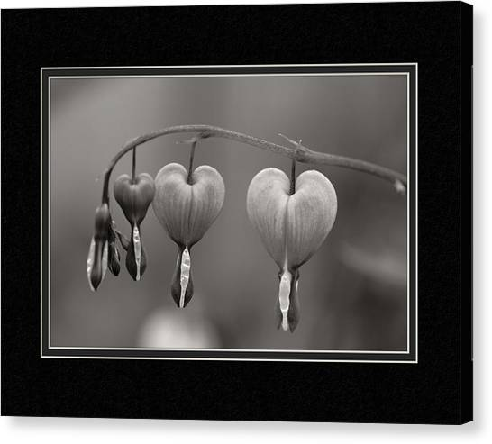 Matting Canvas Print - God's Perfect Heart by Charles Feagans