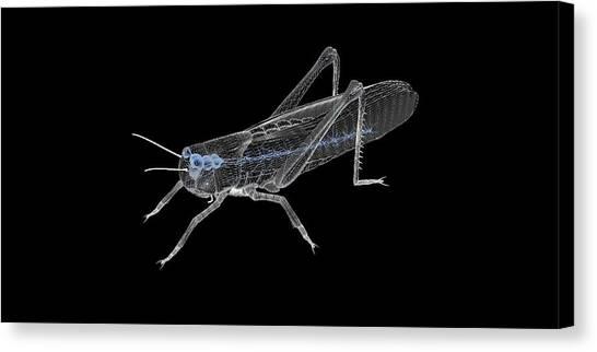 Grasshoppers Canvas Print - Grasshopper Nervous System by Peter Matulavich