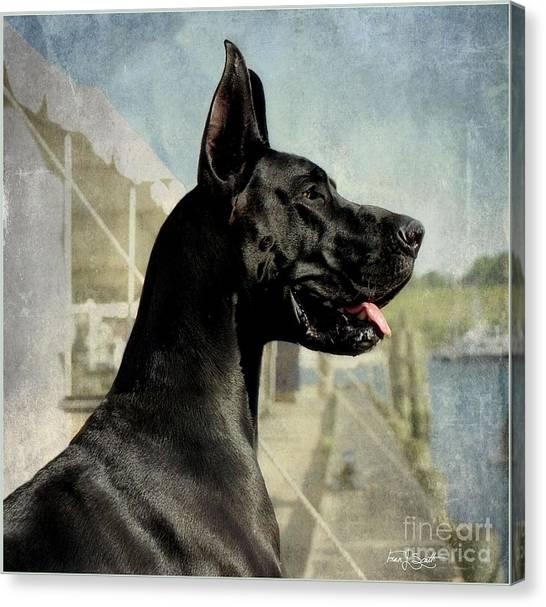 Great Danes Canvas Print - Great Dane by Fran J Scott