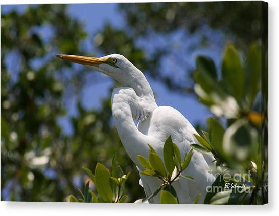 Great Egret 02 Canvas Print