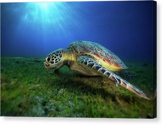 Green Turtle Canvas Print by Barathieu Gabriel