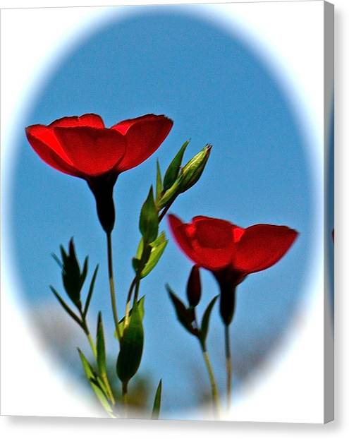 Flower 6 Canvas Print
