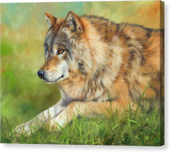 Grey Wolf Canvas Print