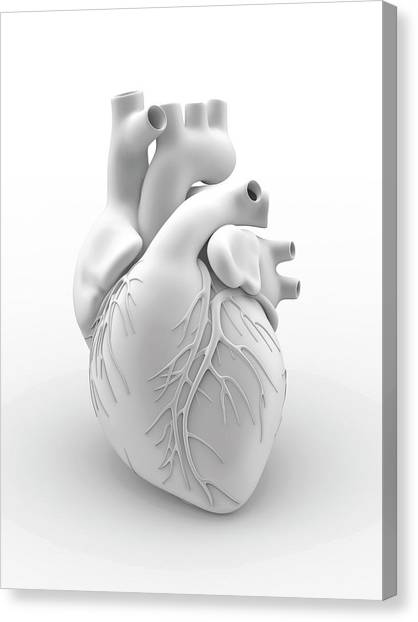 Anatomical Canvas Print - Heart And Coronary Arteries by Alfred Pasieka