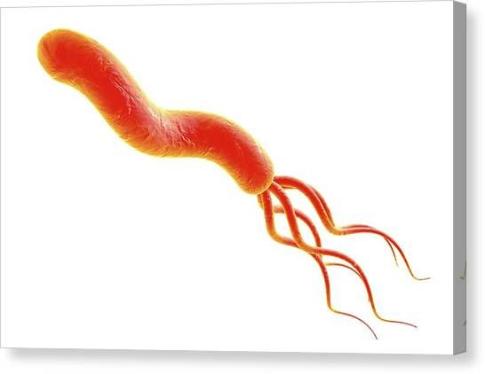 Causes Canvas Print - Helicobacter Pylori Bacterium by Kateryna Kon