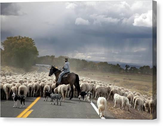 Herding Sheep Canvas Print by Jim West