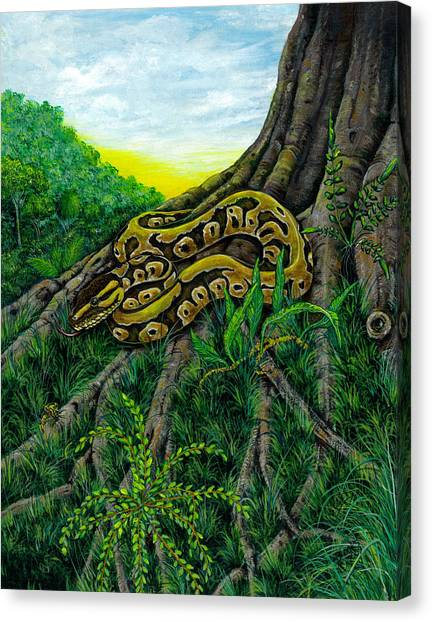 Ball Pythons Canvas Print - Here Comes The Night.  by Richard Brooks