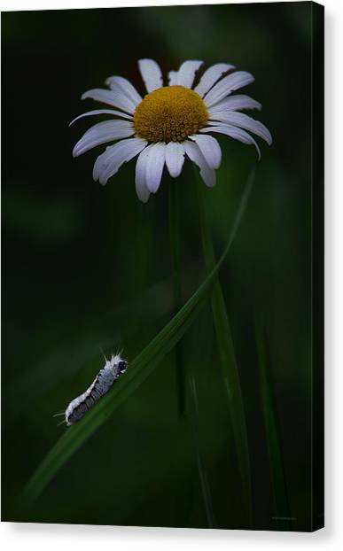 Caterpillers Canvas Print - High Hopes by Ron Jones
