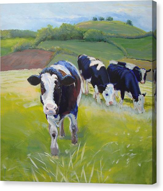 Holstein Friesian Cows Canvas Print