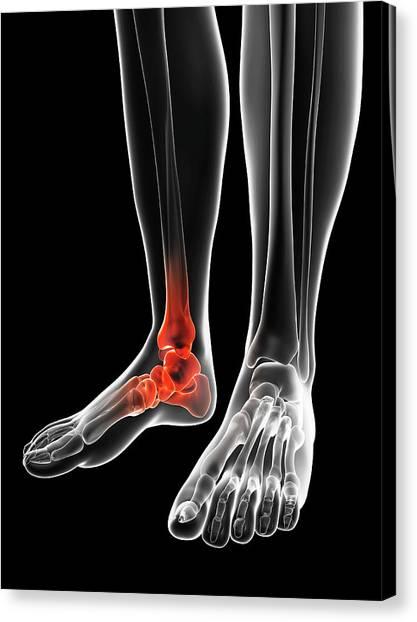 Ankles Canvas Print - Human Ankle by Sebastian Kaulitzki