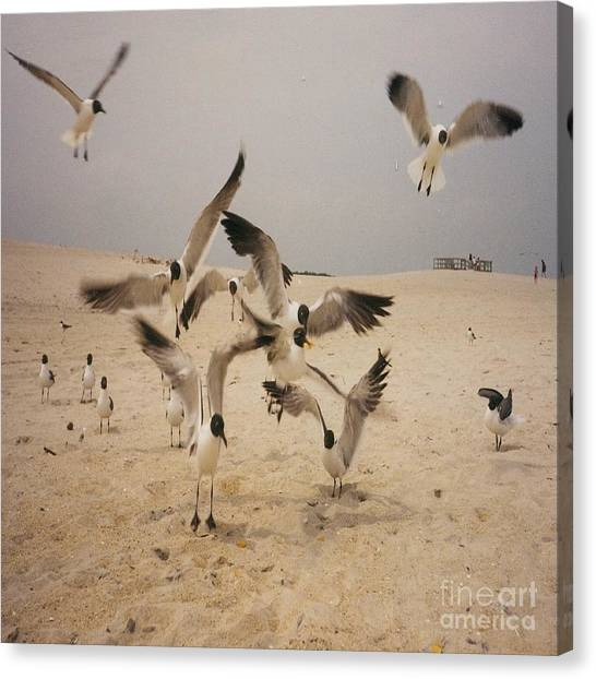 In Flight Canvas Print by Mj Petrucci