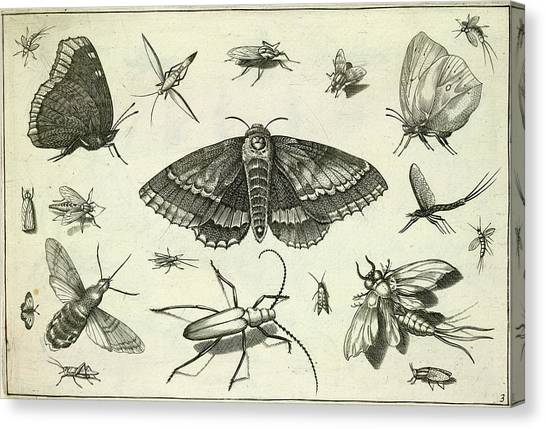 Grasshoppers Canvas Print - Insects by British Library