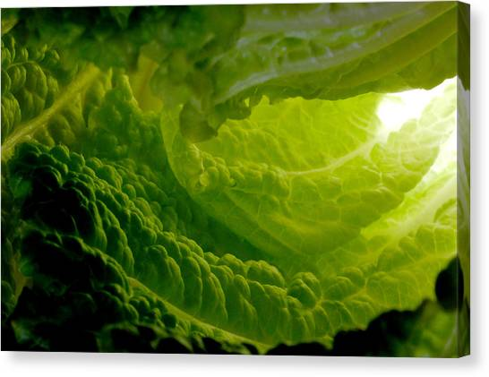 Inside A Lettuce Leaf Canvas Print by Linda Mcfarland