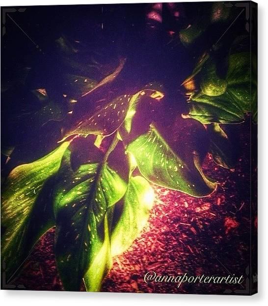Lilies Canvas Print - Darkest Before The Dawn V by Anna Porter