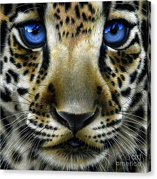 Panthers Canvas Print - Jaguar Cub by Jurek Zamoyski
