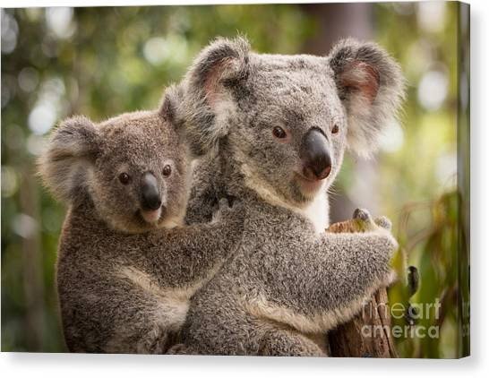 Koala And Joey Canvas Print