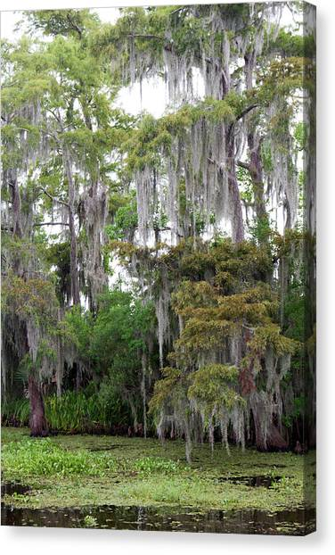 Bayous Canvas Print - La, Lafitte, Airboat Swamp Tour by Jamie and Judy Wild