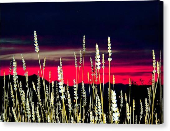 Lavender Sunset Canvas Print by Mavis Reid Nugent