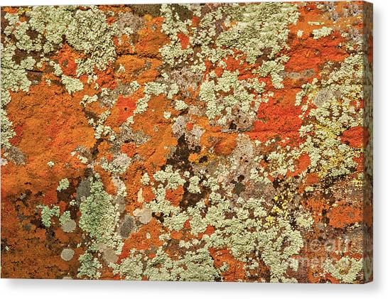 Canvas Print featuring the photograph Lichen Abstract by Mae Wertz