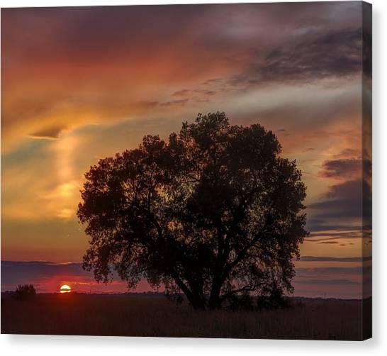 Light Pillar And Cottonwood Canvas Print