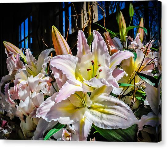 Lilies Out Of The Shadows Canvas Print