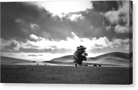 Horses Canvas Print - Livermore Ca by Casey Merrill