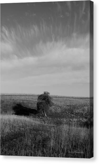 Lonely In The Field Canvas Print by Robert Geier