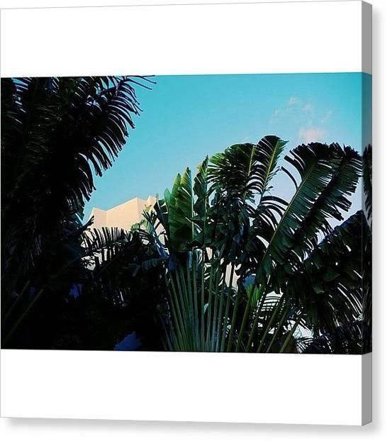 Archimasters Canvas Print - {miami Beach's Art Deco}  In 1979 by Joel Lopez