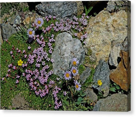 Miniature Rock Garden Canvas Print by George Tuffy