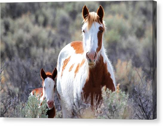 Momma And Baby In The Wild Canvas Print