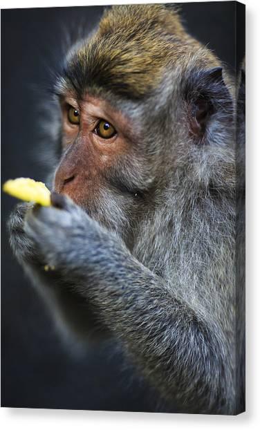 Monkey - Bali Canvas Print