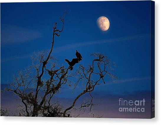 Moonrise Perch Canvas Print